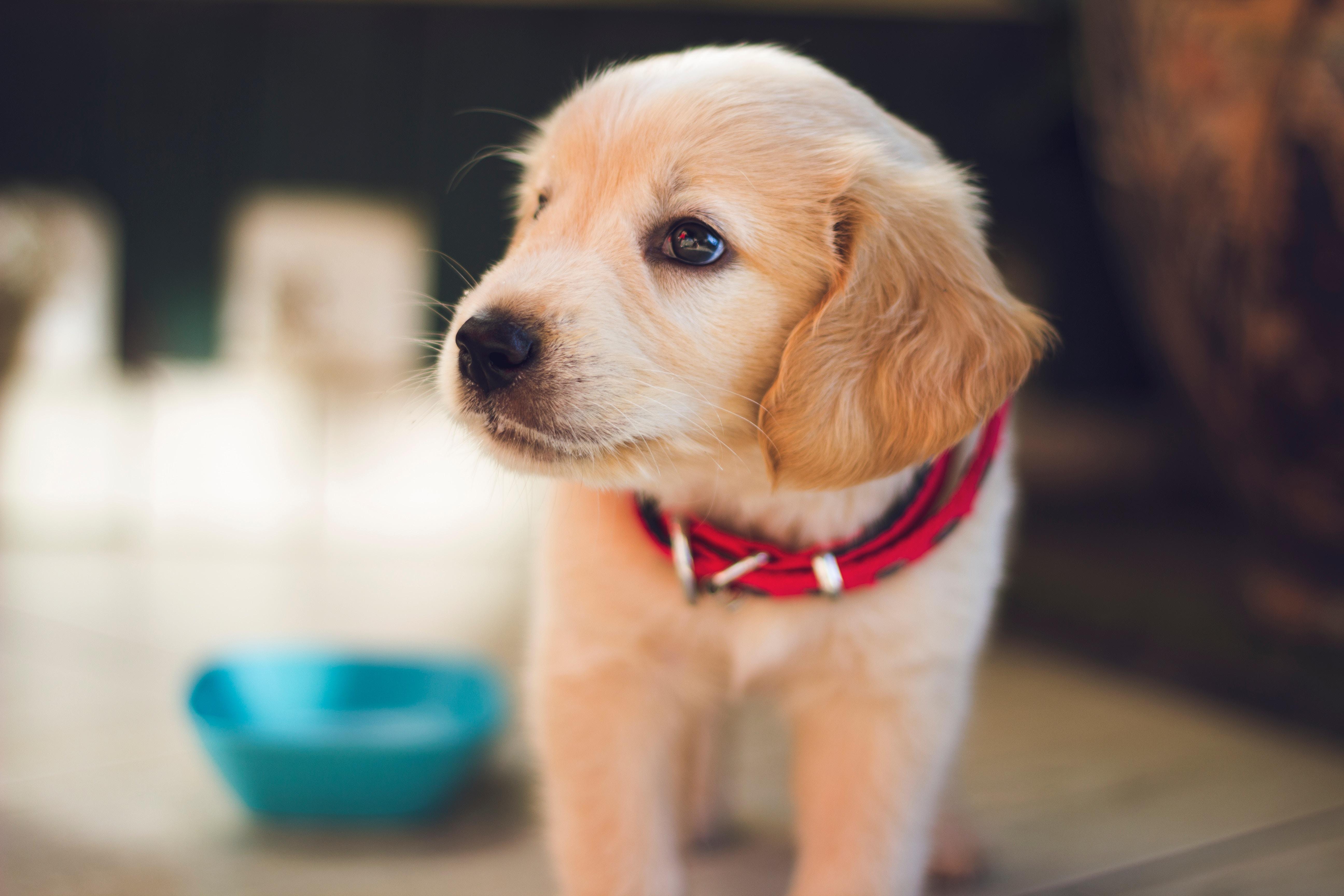 comment voient les chiens