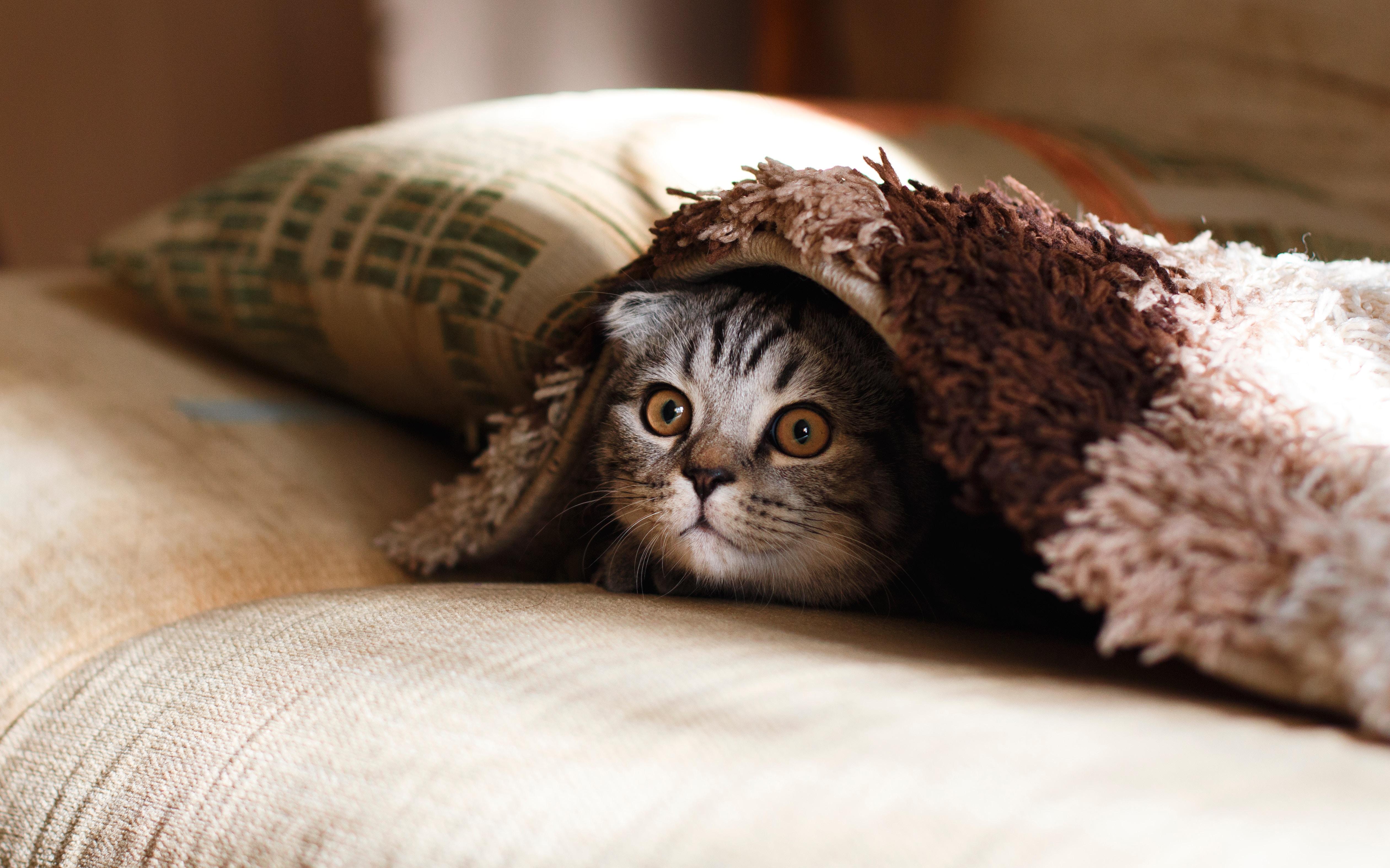 espérence de vie d'un chat