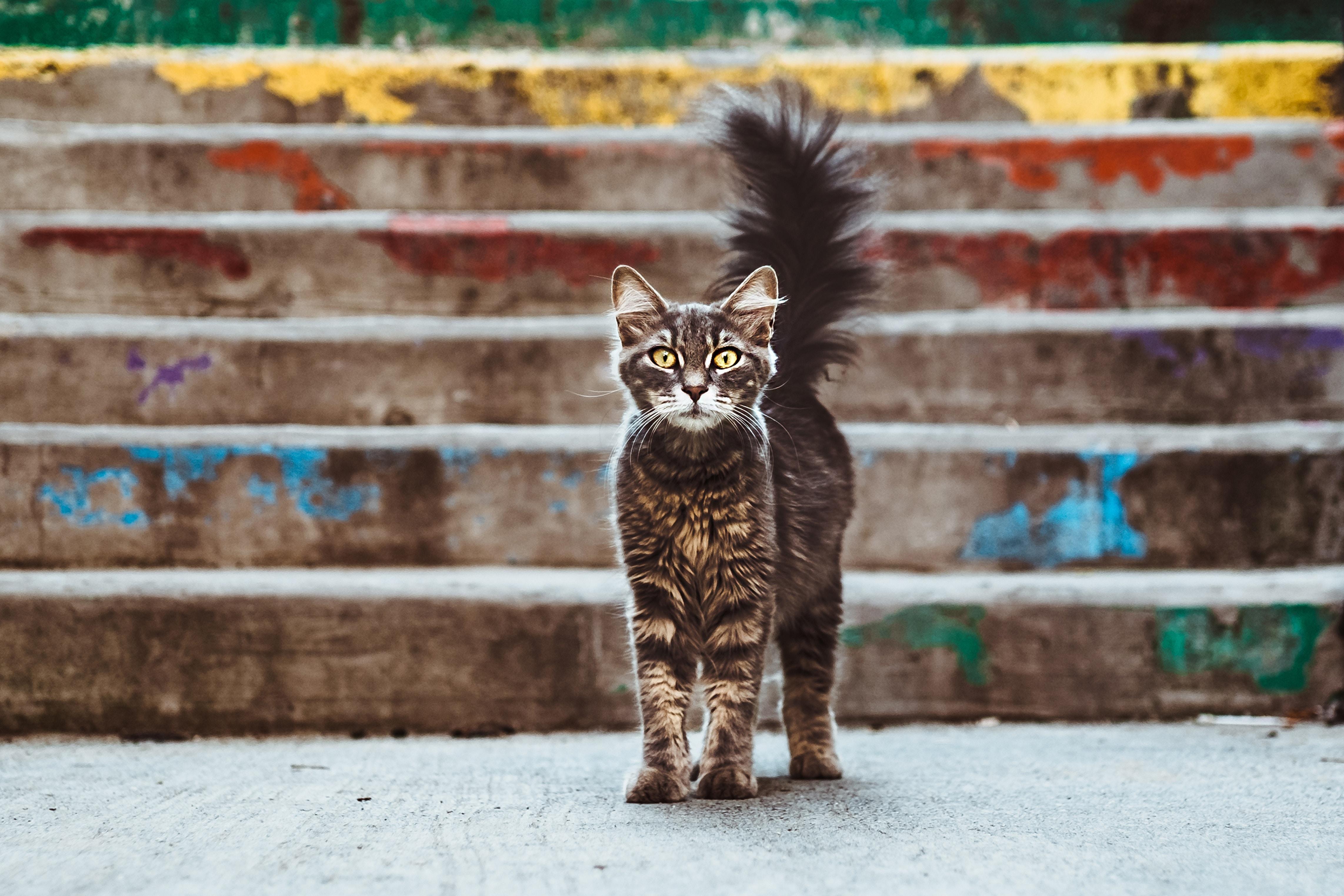 vaccins obligatoires pour chat