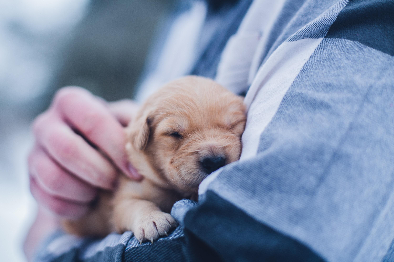 vaccins obligatoires pour chien